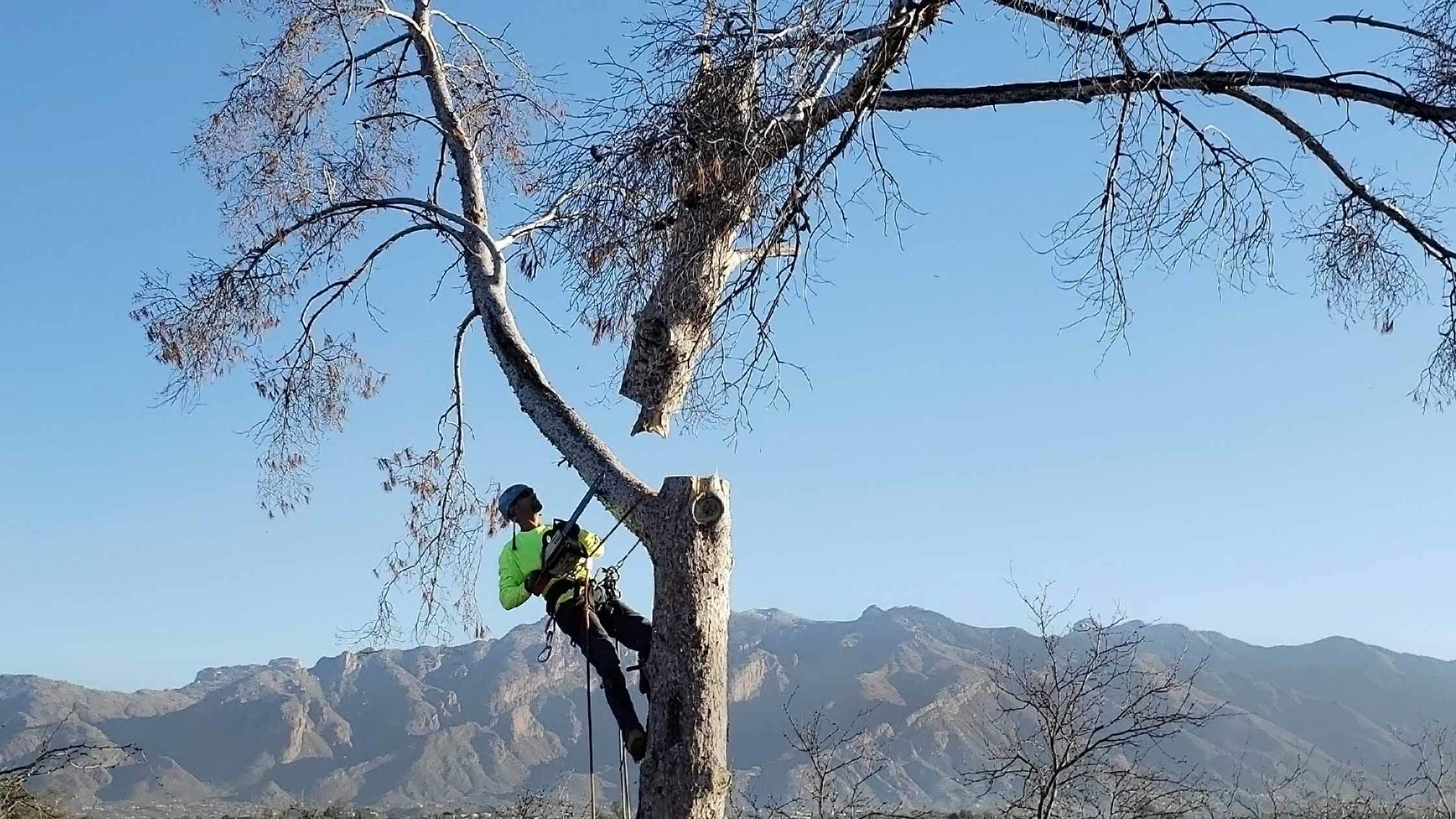Reviews for Branching Out Tree Service