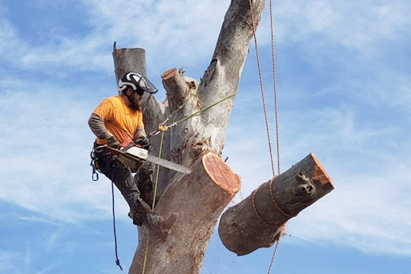 tree removal tucson