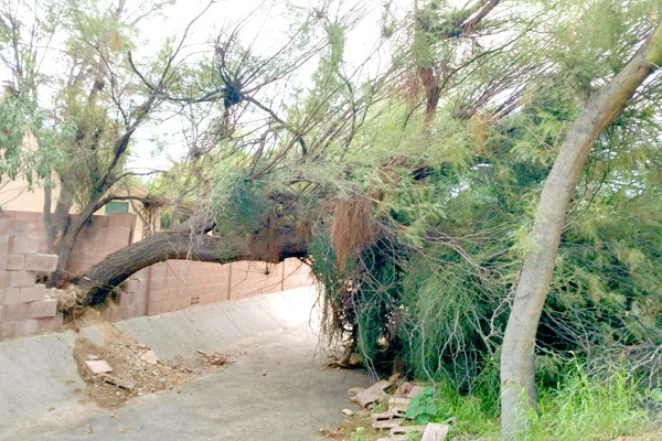 emergency tree removal and storm damage clean up
